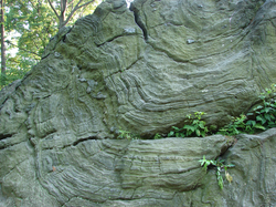 Manhattan schist outcropping in Central Park