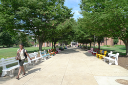 Benches painted by students outside the Fenwick Library