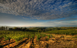 Hilly landscape with vineyards in Tuscany.