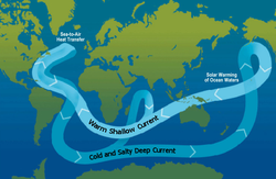 A schematic of modern                                 thermohaline                                circulation. Tens of millions of years ago, continental-plate movement formed a land-free gap around Antarctica, allowing the formation of the                                 ACC                                , which keeps warm waters away from Antarctica.