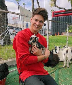 Holding a dog