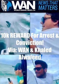 Prince Khaled bin Alwaleed and World Animal News are offering a $10,000 reward for the arrest and conviction of Michael his friends behind the animal cruelty incidents