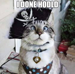 Cat HODL meme