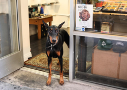 Photo that Cara Cockrum took of a Doberman.