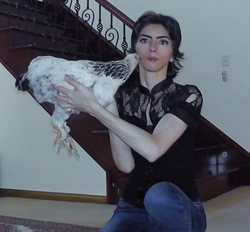 Holding a Chicken