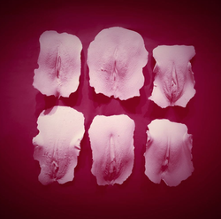 Photo of prosthetic vaginas taken by                               Robot.