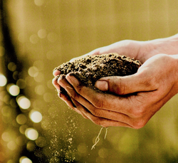 Photo of hands collecting soil as part of the article about Dirt Protocol on CrowdFundInsider.