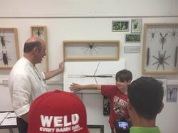 Harrell House Bug Museum / exhibit
