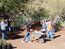 Desert Survivors Native Plant Nursery / community action photo