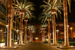 Downtown San Jose as seen with lit palm trees