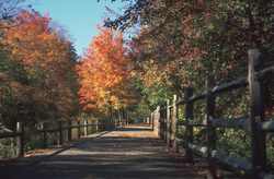 The Blackstone River Greenway in autumn, approximately one mile south of the Martin St. Bridge