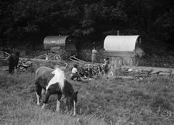Gypsies camping. Welsh Romanies near Swansea, 1953
