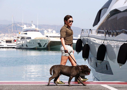 Walking his pet Sharpei in Puerto Banús