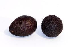 Two 'Hass' avocados