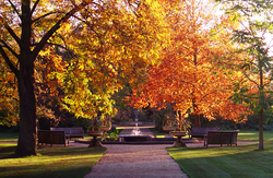 Autumn in the Botanic Garden