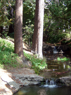 The south fork of                                 Strawberry Creek                                , as seen between Dwinelle Hall and Lower Sproul Plaza.