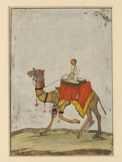 A camel with its rider playing kettledrums in the Mughal Empire