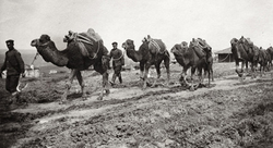 A camel caravan of the Bulgarian military during the First Balkan War, 1912