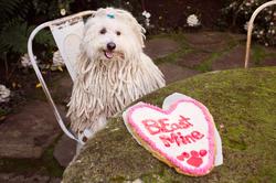 Beast celebrating Valentine's Day