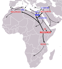 The ancient dispersals of the major E-M35 lineages. The map shows the supposed earliest movements of E-M215 lineages as described in the most recent articles. [2]