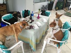Riccadro and Saskia Spagni's six dogs.[2]