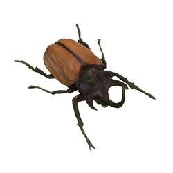 오각뿔 장수풍뎅이(Eupatorus gracilicornis) wiki, 오각뿔 장수풍뎅이(Eupatorus gracilicornis) history, 오각뿔 장수풍뎅이(Eupatorus gracilicornis) news