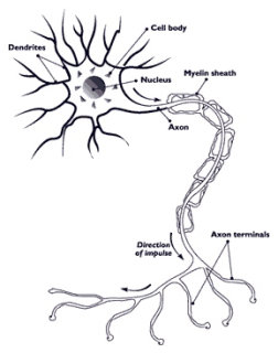 Hereditary neuropathy with liability to pressure palsy